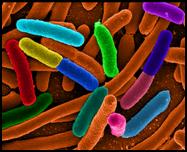 infeccion bacteria  microbio